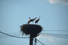 94 more storks