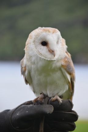 Scot_bird17