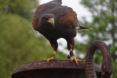 Scot_bird20