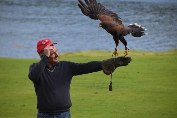 Scot_bird21